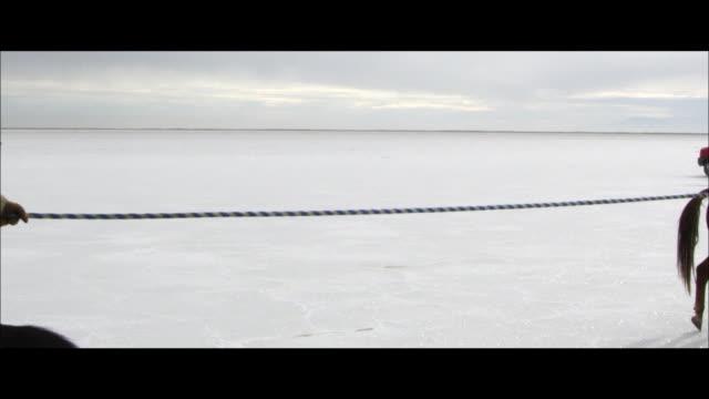 vídeos de stock, filmes e b-roll de slow motion of horses running. - grupo mediano de animales