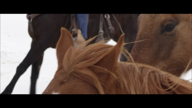 slow motion of horses running. - bonneville salt flats stock videos & royalty-free footage