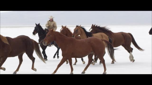 stockvideo's en b-roll-footage met slow motion of horses running. - bonneville zoutvlakte