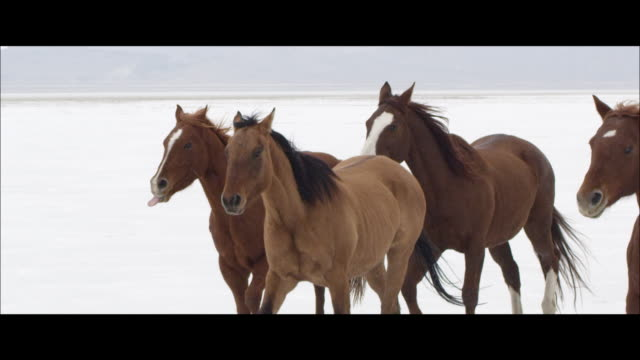 slow motion of horses running. - letterbox format stock videos & royalty-free footage
