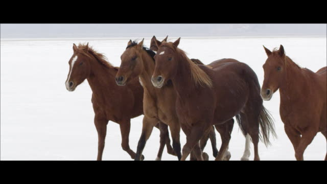 slow motion of horses running. - bonneville salt flats stock videos and b-roll footage