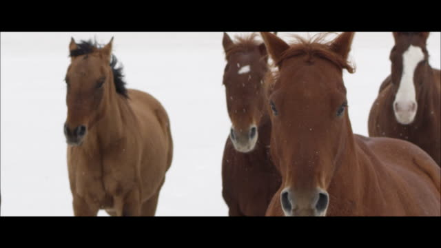 slow motion of horses running. - wide screen stock videos and b-roll footage