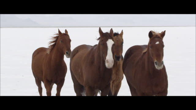 slow motion of horses running. - wide screen stock videos & royalty-free footage