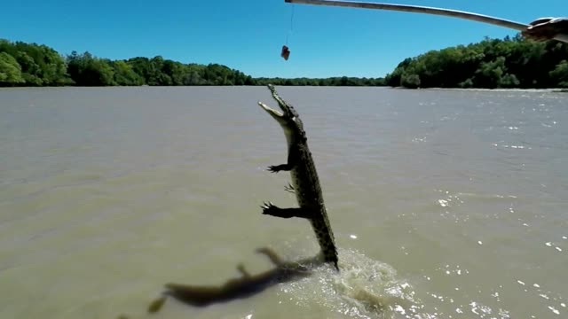 Slow motion of jumping crocodile