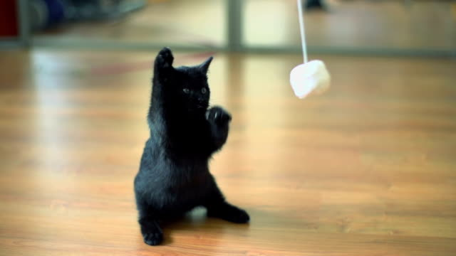 slow motion of kitten playing. - ball of wool stock videos & royalty-free footage