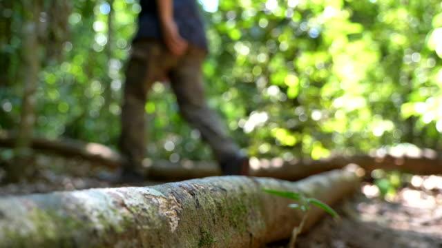 男の散歩のスローモーション。森の中を歩いているハイカー - 外乗点の映像素材/bロール