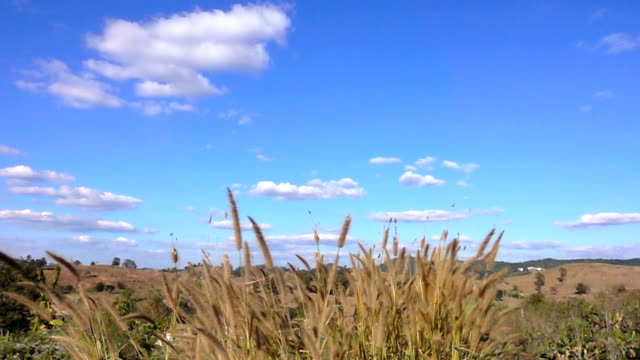 slow motion of meadow and the blue sky with clouds - bugtiger stock videos and b-roll footage