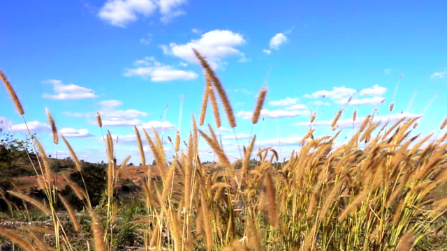 slow motion of meadow and the blue sky with clouds - blade of grass stock videos and b-roll footage