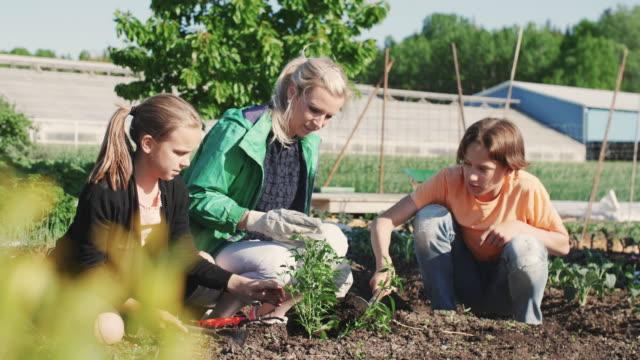 vídeos de stock, filmes e b-roll de slow motion of mid adult woman teaching gardening to children during weekend - atividades de fins de semana