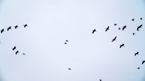 slow-motion von zugvögeln herde von kran und kleine vögel - bird stock-videos und b-roll-filmmaterial