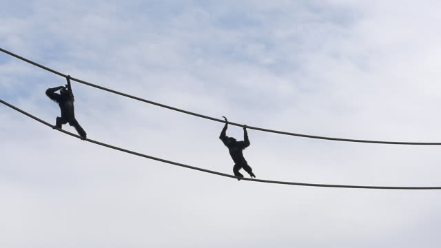 slow motion of monkeys walking on wires in the sky - zoo stock-videos und b-roll-filmmaterial