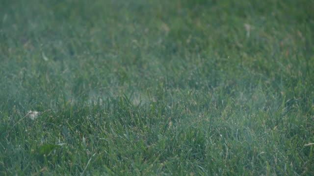vidéos et rushes de mouvement lent du brouillard mobile sur la surface d'herbe - hd format