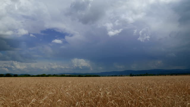 slow motion of moving stormy clouds over a wheat field. - dramatic sky stock videos & royalty-free footage