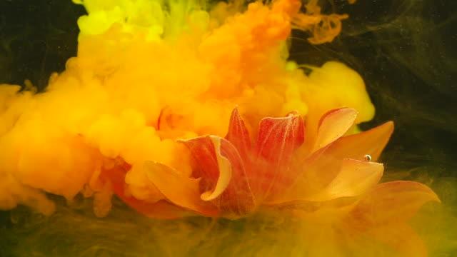 水中を流れるインクを持つオレンジガーベラの花のスローモーション - 水彩点の映像素材/bロール