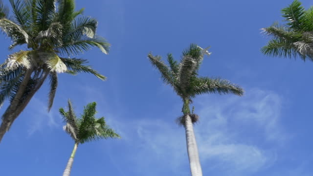 vidéos et rushes de slow motion of plane flying passing the palm tree - palmier