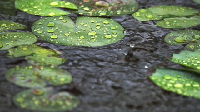 vidéos et rushes de mouvement lent de pleuvoir sur feuilles vertes - commencement