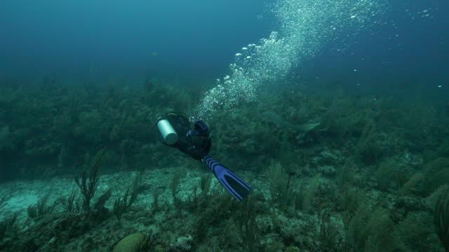 stockvideo's en b-roll-footage met slow motion of scuba diver exploring beautiful ocean - belize city, belize - zwemvlies