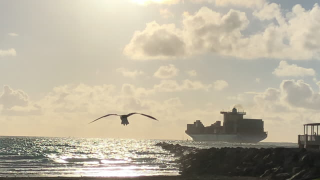 slow motion of seagull bird flying with a cargo container in the background. - 動物の身体各部点の映像素材/bロール