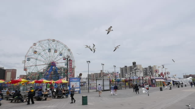 slow motion of seagull flying at cony island, new york - coney island stock videos and b-roll footage