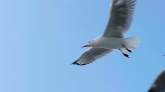 slow motion of seagull - seagull stock videos and b-roll footage
