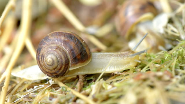 slow motion of snail
