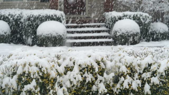 slow motion of snowing and plants around house - grounds stock videos & royalty-free footage