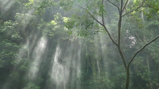 vidéos et rushes de mouvement lent du soleil à travers les arbres avec un spray. - 20 secondes et plus