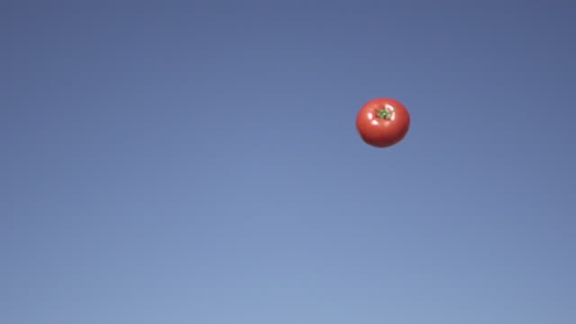 Slow Motion of Tossing Tomato Vegetable into Sky