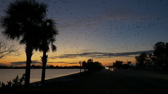 Slow motion of traffic and birds flying at beach Sunset