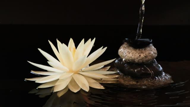 langsame bewegung des wassers fällt auf balance kieselsteine in der nähe von lotus-seerosen-blume - harmonie stock-videos und b-roll-filmmaterial