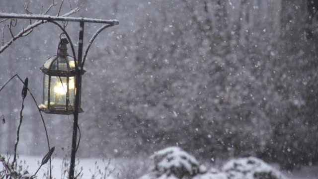 Slow Motion of Winter Snow Storm and Trees