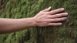 Slow motion of woman hand touching softly the moss on the wall in the tropical rainforest.