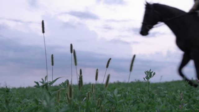 vídeos y material grabado en eventos de stock de slow motion of woman riding horse on grassy field against sky - herbívoro