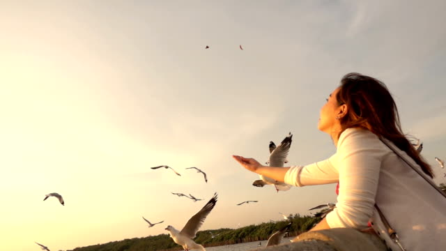 slow motion of young woman feeding seagulls on tropical beach in thailand - gabbiano video stock e b–roll