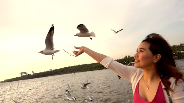 Slow motion of Young woman feeding seagulls on tropical beach in Thailand