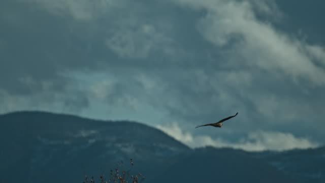 slow motion osprey flight - ミサゴ点の映像素材/bロール