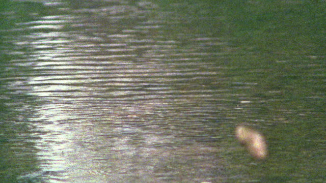 slow motion pan stone skipping across water / missouri - stone object stock videos and b-roll footage
