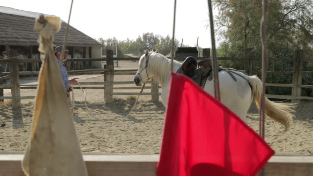slow motion panning shot of hostler holding rope with horse at ranch on sunny day - camargue, france - film festival stock videos & royalty-free footage