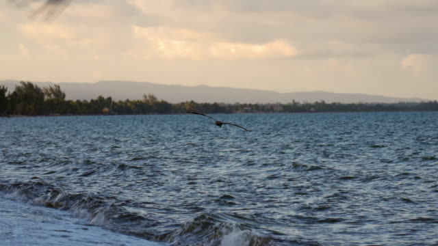 slow motion: pelican flying over sea against sky during sunset, bird with spread wings over waves - belize city, belize - spread wings stock videos & royalty-free footage
