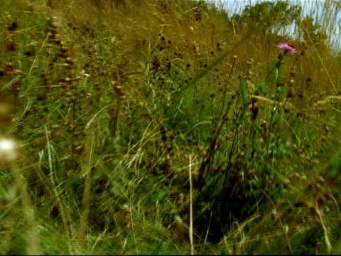 vídeos y material grabado en eventos de stock de slow motion point of view walking through tall grass and wild flowers / france - hamster