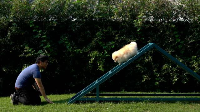 スローモーションの犬は遊び場の階段を下りて登る - 階段点の映像素材/bロール
