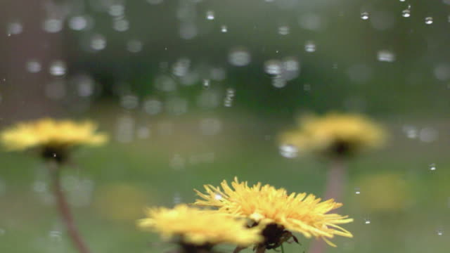 slow motion rain - super slow motion stock videos & royalty-free footage