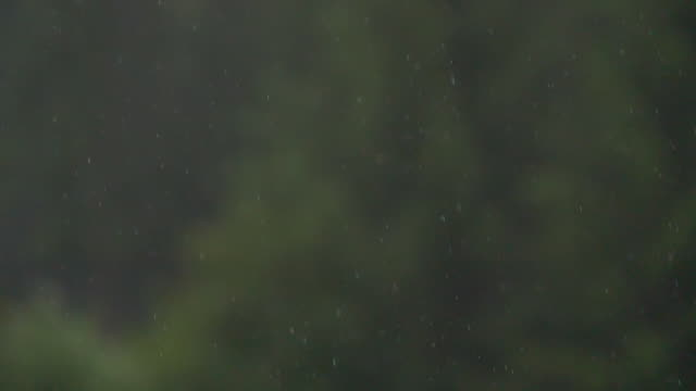 Slow motion rainy day in a forest