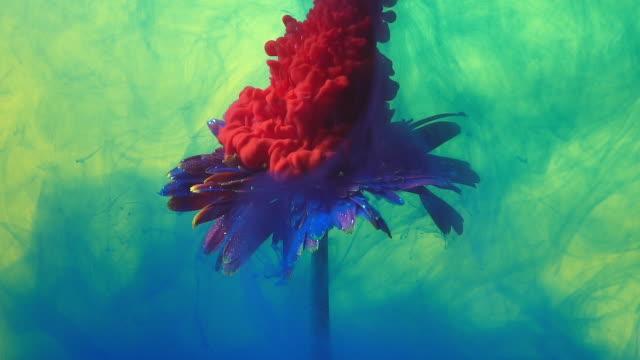 vídeos de stock, filmes e b-roll de gota de tinta vermelha de câmera lenta em flor. - forma da água