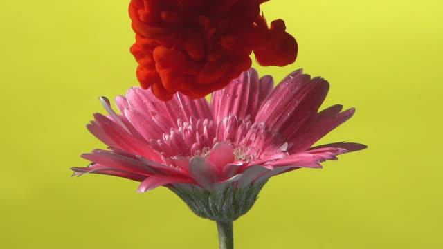 スローモーション赤インクは、花にドロップします。 - ピンク色点の映像素材/bロール