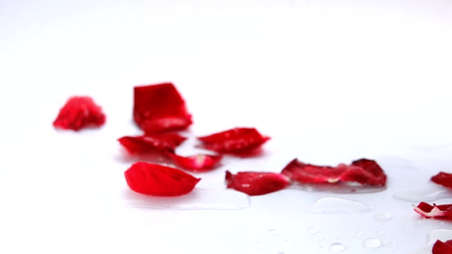 Slow motion red rose