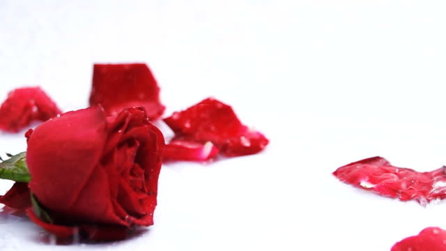 slow motion red rose - human heart stock videos & royalty-free footage