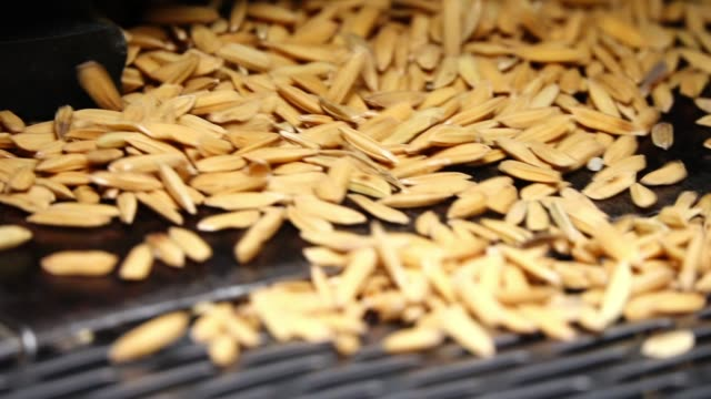 slow motion rice grain on rice milling machine - performing arts event stock videos & royalty-free footage