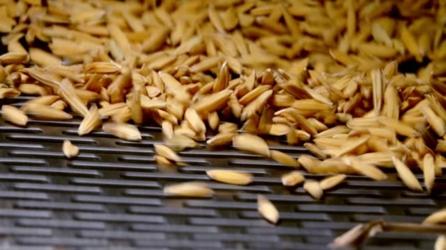 slow motion rice grain on rice milling machine - cereal plant stock videos & royalty-free footage
