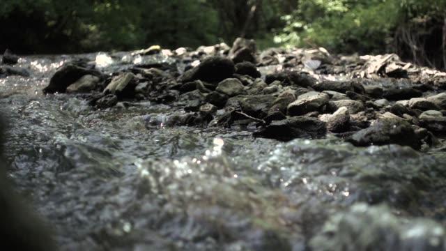 夏に森にスローモーション川
